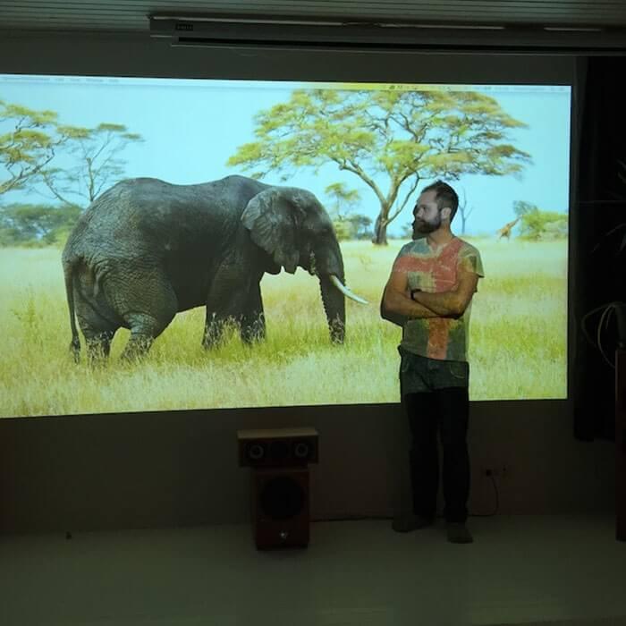 imagen-de-un-elefante-proyectada-en-la-pared-de-una-oficina